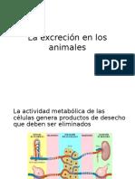 La Excreción en Los Animales