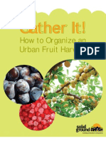 How to Organize an Urban Fruit Harvest
