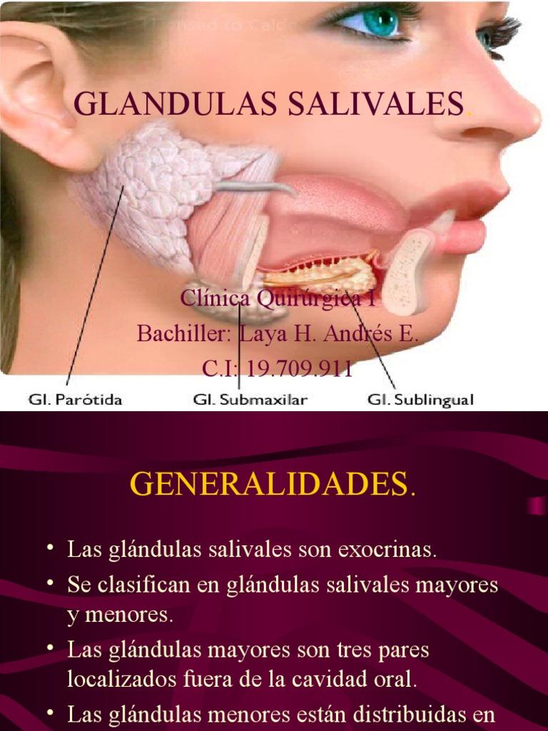 Anatomia Glandulas Salivales