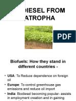 Biodiesel From Jatropha