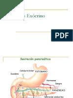 Pancreas Exocrino