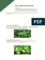 Hierbas y Especies Peruanas