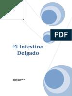 El Intestino Delgado