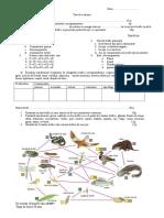 Test Relatii Trofice in Ecosistem