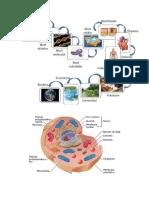 Niveles de Organización Celular - Saludos en Inglés (Imágenes)