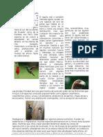 Parctica 10.Docx 2.1