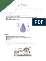 Resumo Aula Porifera e Cnidaria