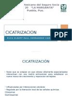 Cicatrizacion 28032017