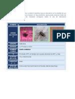 Actividad 4 artrópodos informe laboratorio Biologia Ambiental