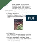 galápagos guía de viaje.docx