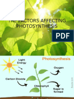 The Factors Affecting Photosynthesis