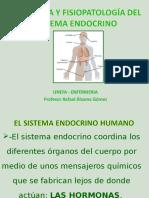 SISTEMA ENDOCRINO_4.ppt