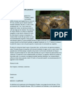 Nauyaca Nariz de Cerdo Yucateca VILLEGAS RAMOS DAVID
