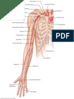 arterial upper 1 10