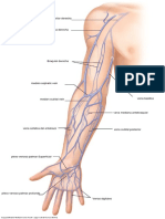 vein upper anatomy 1 13