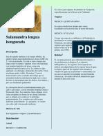 Salamandra Lengua Hongueada Cortes Marco