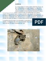 Rana de Arbol Yucateca