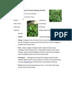 Tumbuhan Yang Berada Di Taman Perlintasan BOGOR