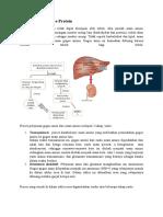 Proses Katabolisme Protein