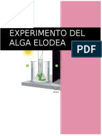 Experimento Del Alga Elodea
