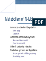 BC N metabolissm