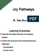 Sensory System- Pathways(2)