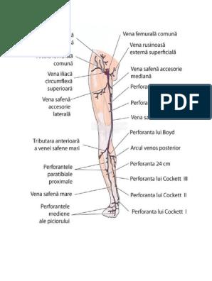 picior umflat de la genunchi in jos vena bombată în coapsa interioară