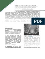 Práctica-1micologia