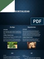 Horta Liz As