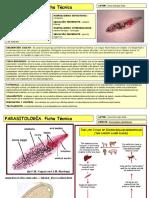 dicrocoelium dendriticum ppt