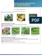 All Bollworm Pests
