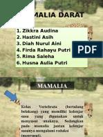 PPT Cheetah.pptx