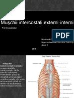 muschii intercostali