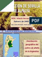 Alfalfa (1)