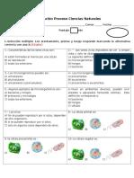 Evaluacion Proceso 7mo