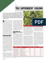 calafate_otro_superberry_chileno.pdf