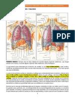 05. Tumores Pulmonares (1)