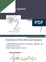 Nervous System for Nursing