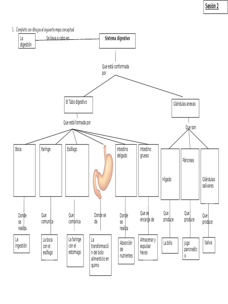 Mapa Conceptual Aparato Digestivo.Mapa Conceptual Sistema Digestivo 5to Doc Sistema Digestivo Humano Abdomen