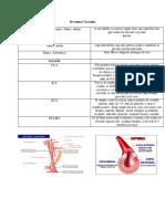 resumen vascular clase