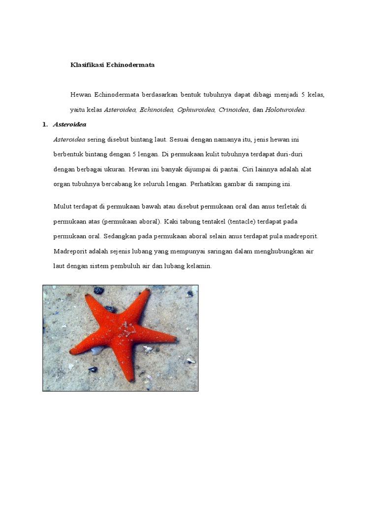 980 Gambar Hewan Kelas Echinodermata Gratis Terbaru