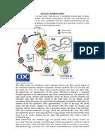 49549_Ascaris_lumbricoides_notes.pdf