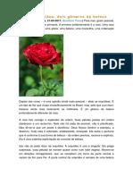 Rosa e Orquídea - Dois Gêneros de Beleza