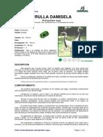 Ficha GRULLA DAMISELA _Antropoides Virgo