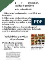 variabilidad genetica