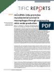 microRNA-146a