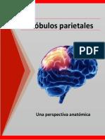 Lobulos parietales completo.pdf