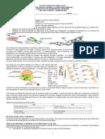 Guia de ADN Y ARN