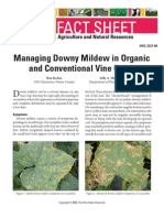 Managing Downy Mildew in Organic Vineyards