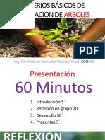 Criterios de Plantacion